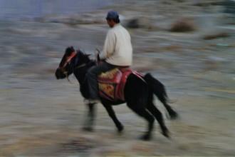 Tibet Horses 10