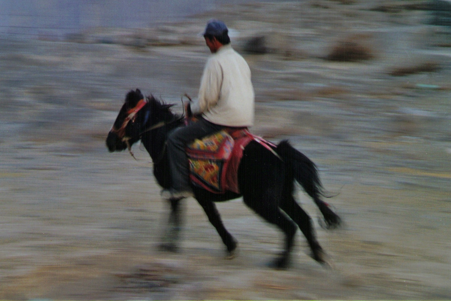Tibet Horses 10