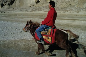 Tibet Horses 6