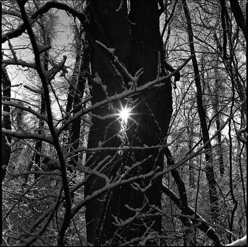 winter-trees-jorge-santiago1